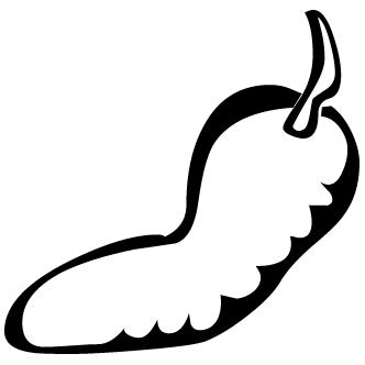 Vector de Aji
