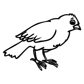 Vectores de Aves Varias