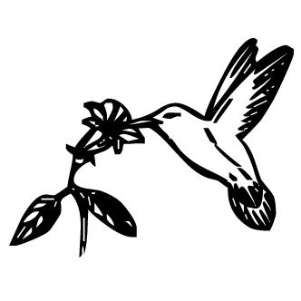 Vector de Colibri