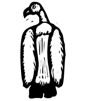 Vector de Condor