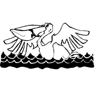 Vector de Pelicano