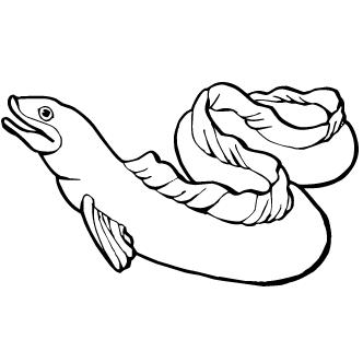Vectores de Anguila