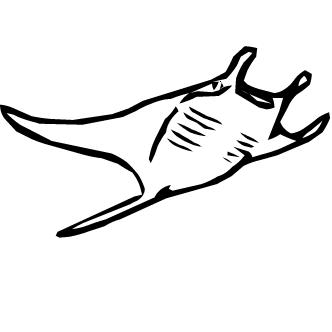 Vector de Mantaralla