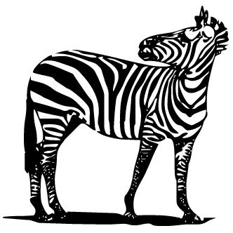 Vectores de Cebras