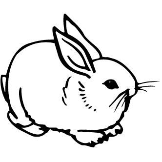 Vectores de Conejos
