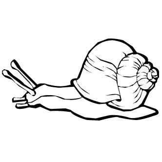 Vector de Caracol