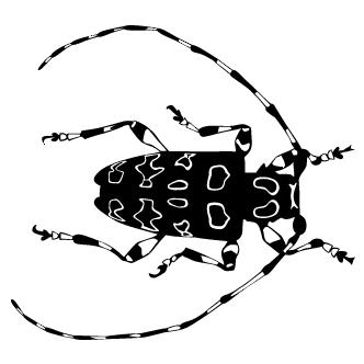 Vector de Escarabajo