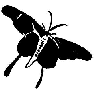 Vector de Mariposa