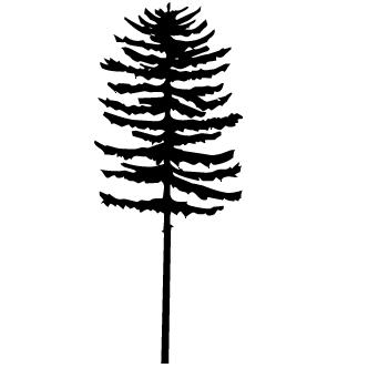 Vector de Araucaria