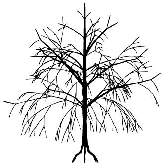 Vector de Arboles Secos