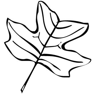 Vector de Hoja De Ginkgo Biloba