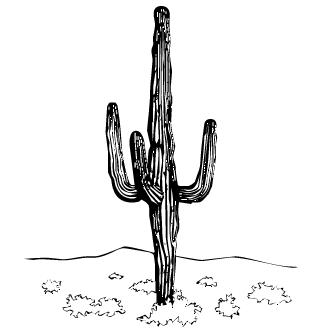 Vectores de Cactus