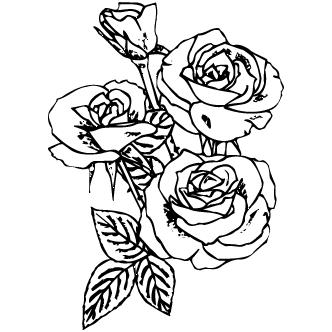 Vectores de Varias Rosas