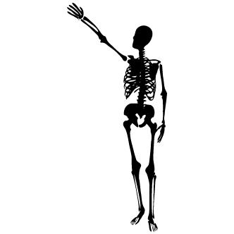Vector de Cuerpo Humano